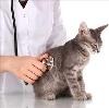 Ветеринарные клиники в Новодугино